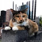 お墓の上の三毛猫さんに話しかけました