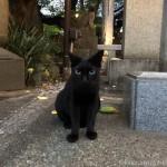 目が大きな神社の黒猫さん