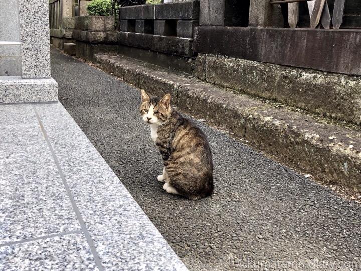 墓地の猫さん