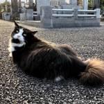 ペタッと座る長毛の黒白猫さん