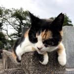 墓地の三毛猫さんとお話ししました