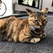 道路の真ん中の猫さん