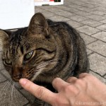 人懐っこいキジトラ猫さん兄妹に会いました