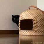 ロフトに逃げてエサを食べなかった留守中の猫