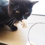「キャットダンサー」で遊ぶ猫