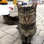 キジトラ猫さん兄妹の頭をマッサージしました