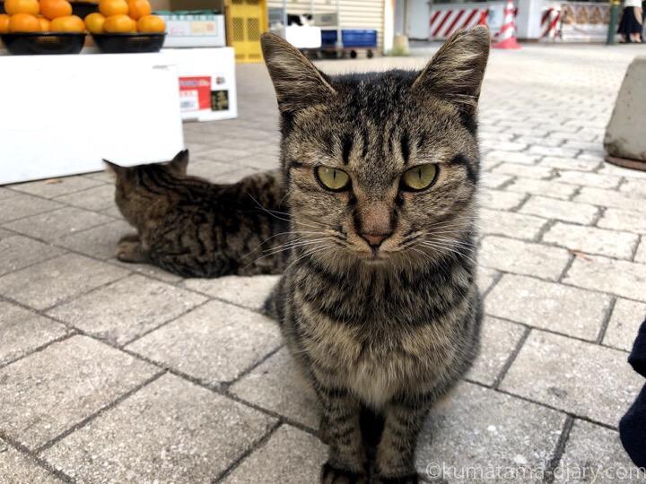 キジトラ猫さん兄妹