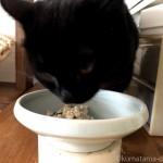 カウンターの上で手作りごはんを食べる猫の動画