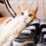 ビンディングシューズを枕にして寝る猫