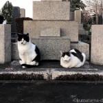 お墓の前に並んで座る猫さんたち