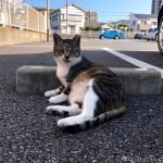 舌が出ていた駐車場のキジトラ白猫さん