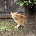 墓地で見かけた賢い茶トラ猫さん