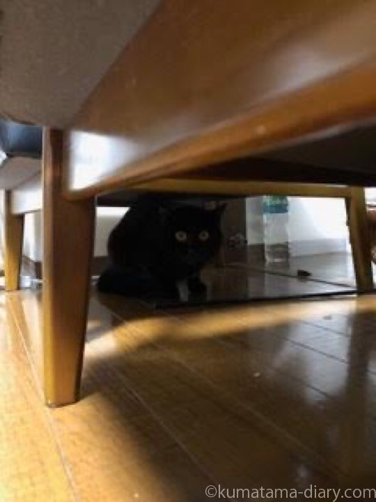 ソファの下に隠れるふみお