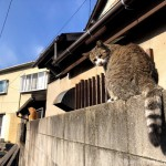 塀の上でひなたぼっこする猫さんたち