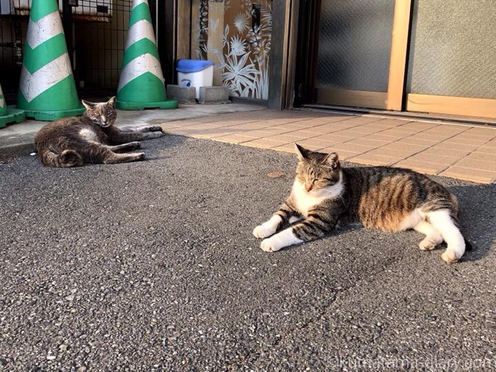 ひなたぼっこする猫さんたち