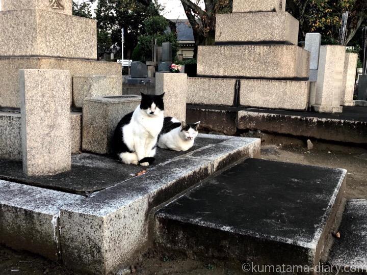 黒白猫さんとキジトラ白猫さん