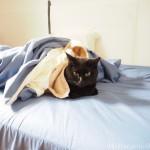 一緒に二度寝してくれる猫
