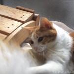 羊毛ダスターにパンチする猫