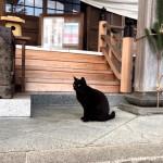 年末の神社の猫さんたち