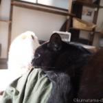 【月命日】膝の上で寝そべる黒猫