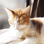 毛づくろいのときの鼻のシワが可愛い猫