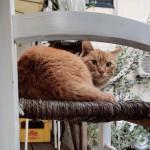 椅子の上の茶トラ猫さん