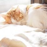 IKEAの「DUKTIG 人形用ベッド」でひなたぼっこを欠かさない猫