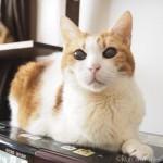 食事を抜くのは耐えられない猫