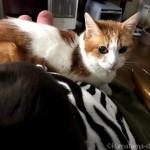 ゼブラ柄の「着る毛布」を着て猫と一緒に寝ています