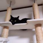 キャットタワーから彼を見下ろす猫