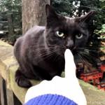 神社のかっこいい黒猫さんをなでなでしました