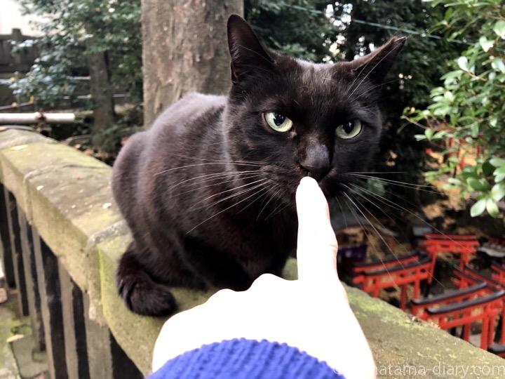 黒猫さん黒猫さん