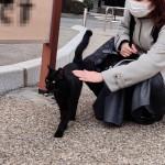 人懐っこい黒猫さんをなでなでしました