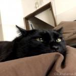 ペットシッターさんが来ると隠れる留守中の猫