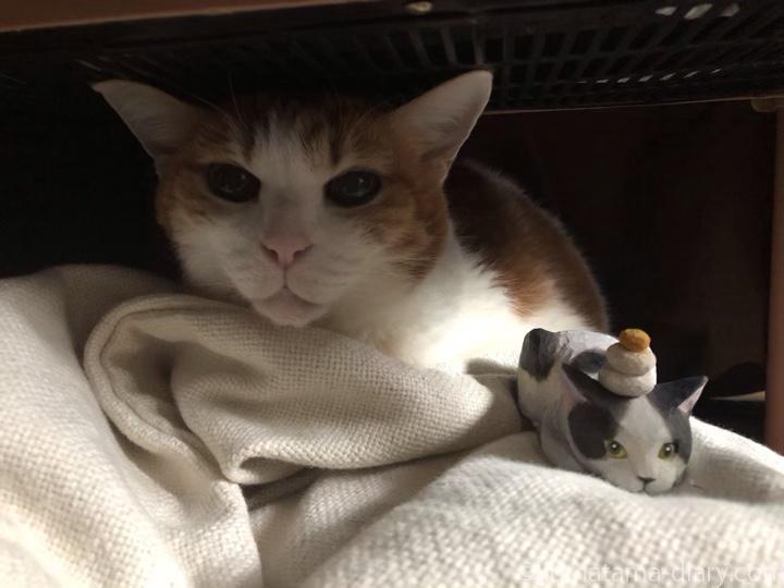 たまきとたまきと木彫り猫