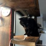 キャットウォークで猫と毛糸の引っ張り合い