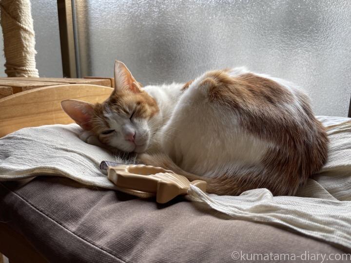 IKEA猫ベッドたまきとピロコーム
