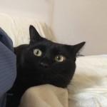 布団に入るときに前足で引っかく猫