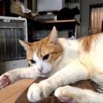 「ペットの夢こたつ」の上でケンカする猫たち