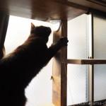 キャットウォークに引っかけたひもで遊ぶ猫