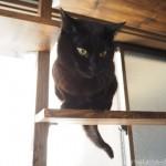 「クロッツ やわらか湯たんぽ 足用ショートタイプ」が苦手な猫