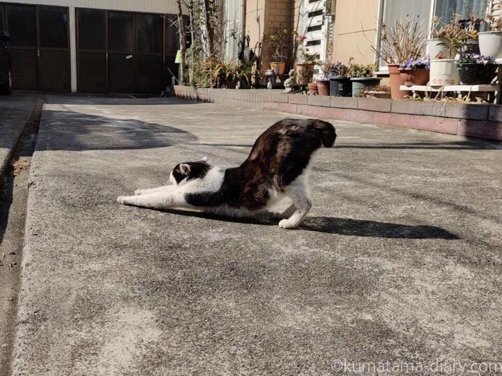 黒白猫さん伸び
