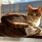 「iPhone 12 pro」で猫の写真がキレイに撮れるようになりました