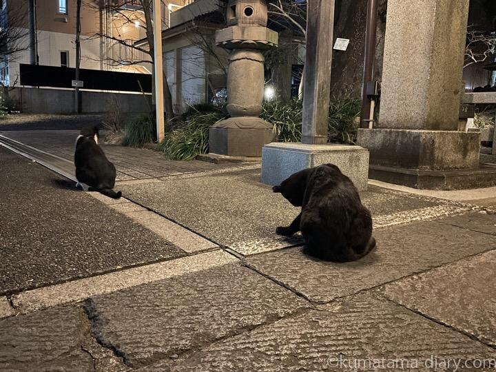 黒猫さんと黒白猫さん黒白猫さん