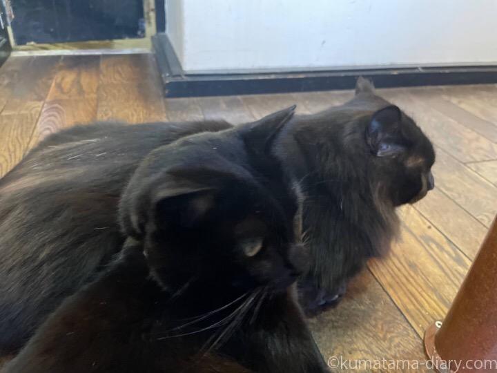 黒猫さん兄弟
