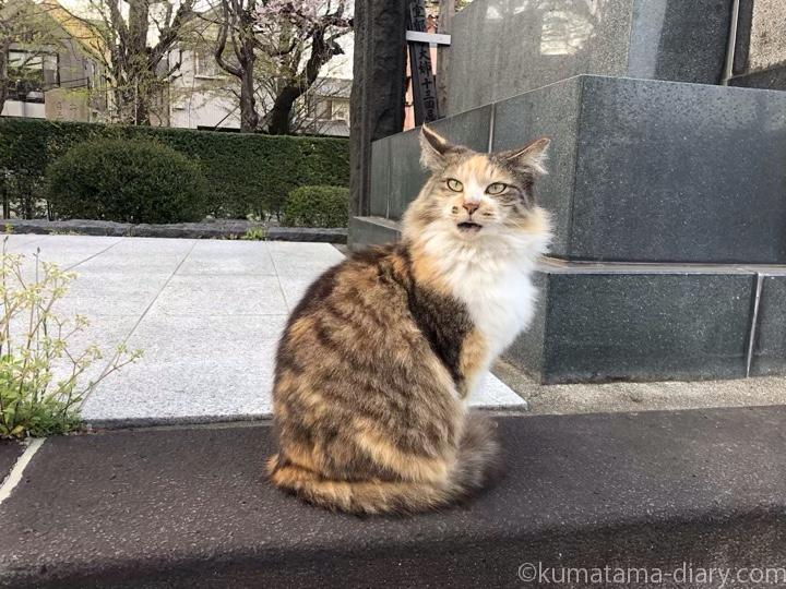 寺の三毛猫さん