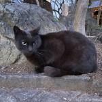 そっけなかった黒猫さん