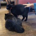 仲が良い黒猫さん兄弟と触れ合いました