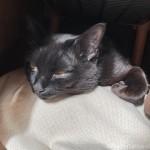「ペットの夢こたつ」の中の湯たんぽに乗る猫をなでなで