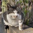 キジトラ白猫さんと木彫り猫